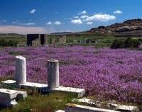 Delos Island At Spring Time (A Picture Taken By Henry Wu)