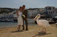 Wedding 63