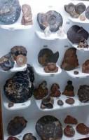 Μουσείο Κωτσιομύτη Φυσικής Ιστορίας