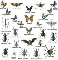Μουσείο Κωτσιομύτη Φυσικής Ιστορίας: Συλλογές Εντόμων