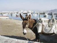 Mykonos: By Land or by Sea